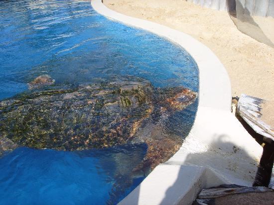 Tivoli Ecoresort Praia do Forte: Sea Turtles at the Tamar Project - Praia do Forte