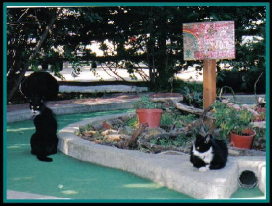 Golf Gardens Miniature Golf: The cats will help you get a hole in one!