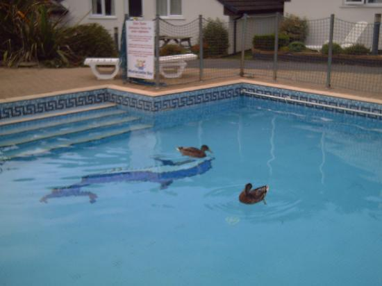 Golden Coast Holiday Village: the duck pond