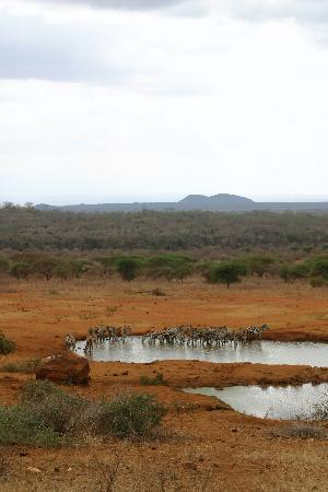 Kilaguni Serena Safari Lodge: Very busy waterholes!