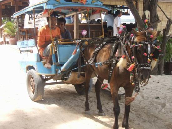Gili Trawangan, Indonesië: Miniature horse