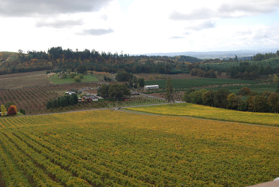 Willamette Valley Vineyards: View from the Terrace in the Fall