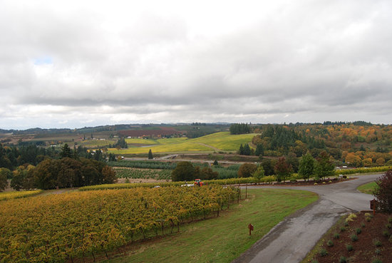 A Fall Day at Willamette Valley Vineyards