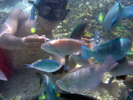 Redang Holiday Beach Villa : upclose feeding at Marine Center