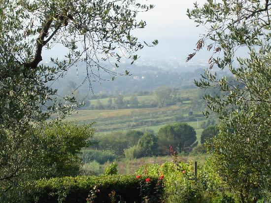 Fattoria Maionchi: View of the olive groves.