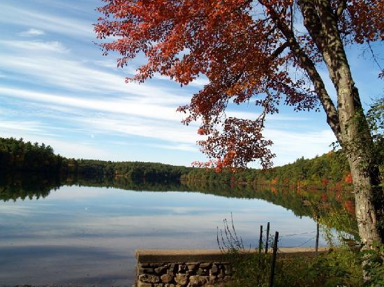 Walden Pond State Reservation : Walden in Autumn