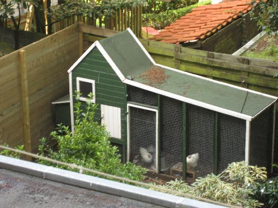 The Collector Bed & Breakfast: The chicken coop