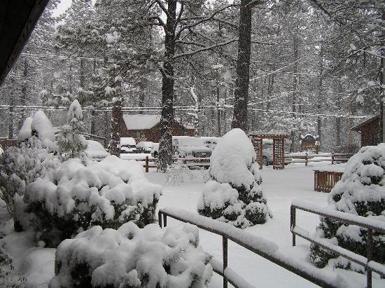 Shadow Mountain Lodge and Cabins: It's Beginning to Look A Lot Like Christmas!