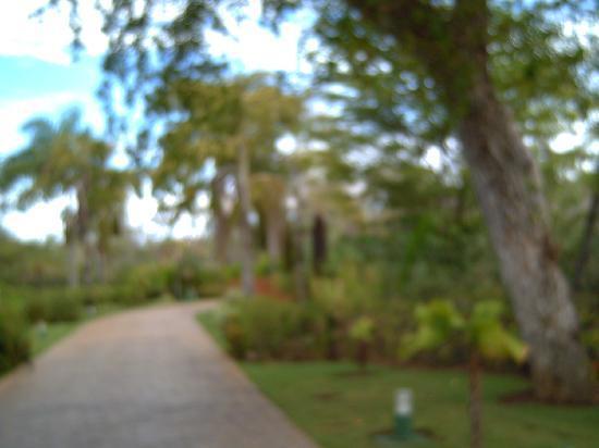 Caribe Club Princess Beach Resort & Spa: Paseillo hacia el lobby