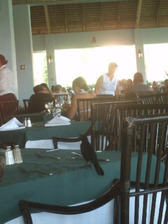 Caribe Club Princess Beach Resort & Spa: El Buffet