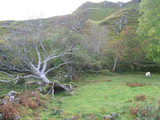 Skye, UK: Faerie Glen