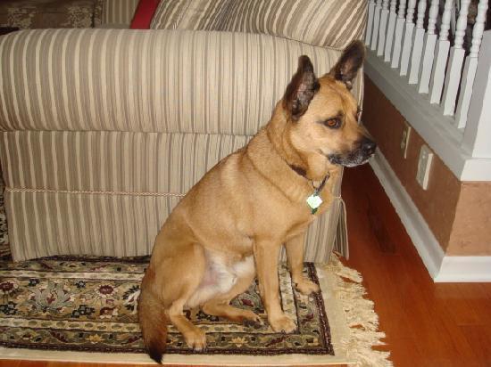 Hoppy's Bed & Breakfast : odie, the friendly dog