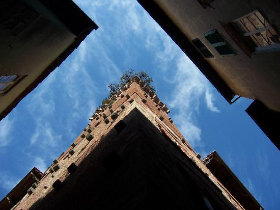 Guinigi Tower: from ground level looking up