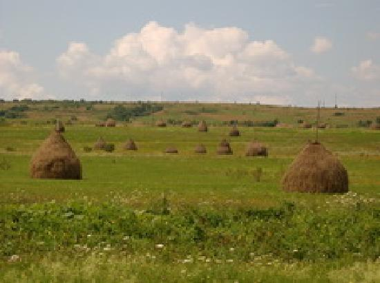 Baia Mare, Rumania: Maramures countryside with haystacks