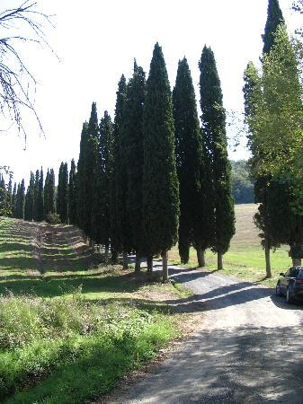 Fattoria Il Piano: road to property