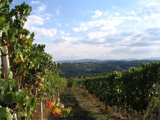Agriturismo Fattoria Il Piano: vineyard