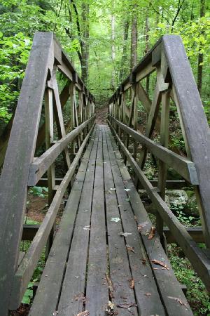Wartburg, TN: Bridge and Trail at Frozen Head State Park