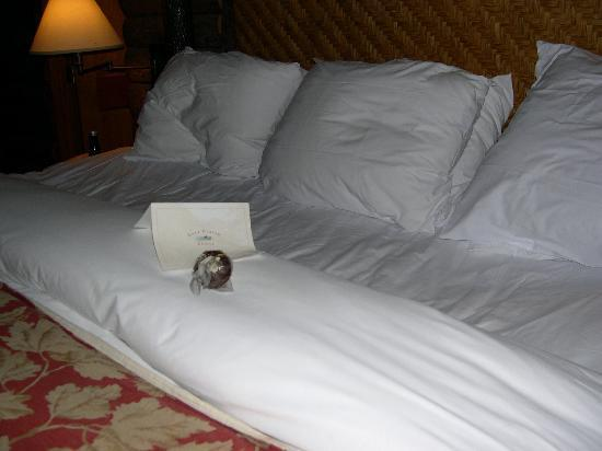 Lake Placid Lodge: Turndown service with next day's weather and dog treat