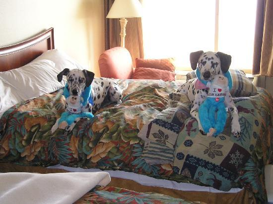 Ramada Plaza Nags Head Oceanfront: J and Abby enjoying their own bed