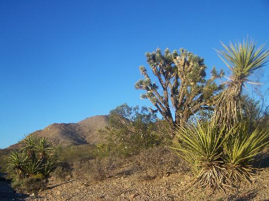 Desert beauty leaving Laughlin, NV