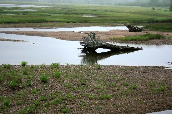 Cape Breton Island, Canada: nice wetland scenery near entrance to national park