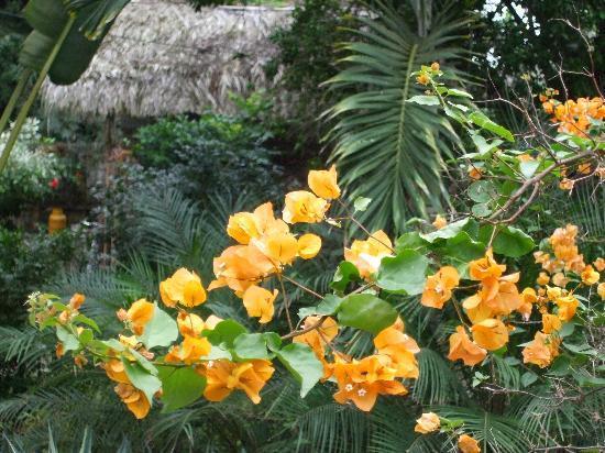Alandaluz Hosteria y Pueblo Ecologico: Flowers