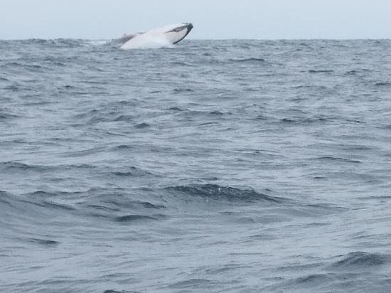 Alandaluz Hosteria y Pueblo Ecologico: Whale Watching tour