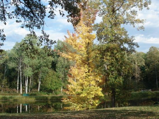 Hinchman Acres Resort: Fall Color