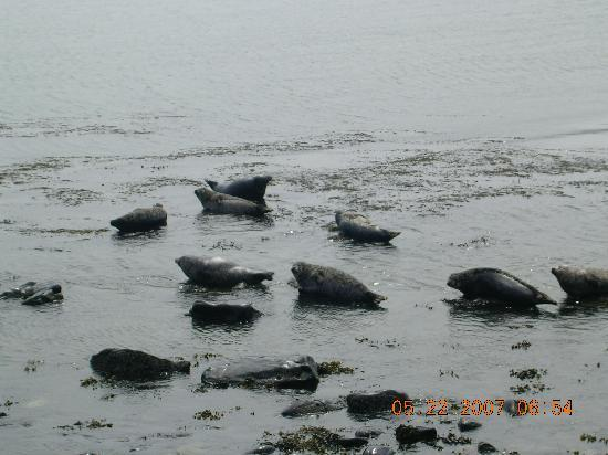 Seals off Rathlin Island
