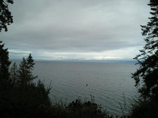Eagle Landing Bed and Breakfast: View over the ocean, with bald eagle