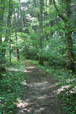 Roan Mountain, Tennessee: Roan Mountain State Park Trail