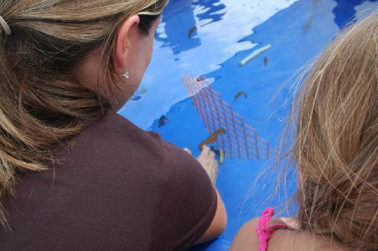 Ocean Rider Seahorse Farm : Holding a seahorse.