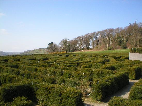 Castlewellan Forest Park: The top left of the maze