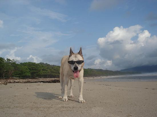 Santa Teresa, Costa Rica : Cool Dog