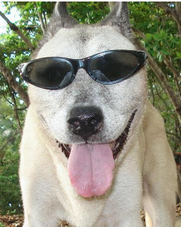 Santa Teresa, Costa Rica: Happy Dog