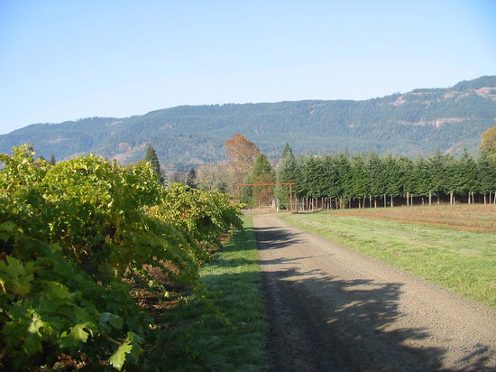 HillCrest Winery and Distillery: The road to vineyard