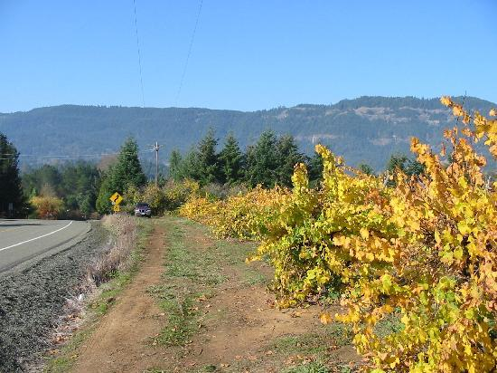 HillCrest Winery and Distillery : road to paradise