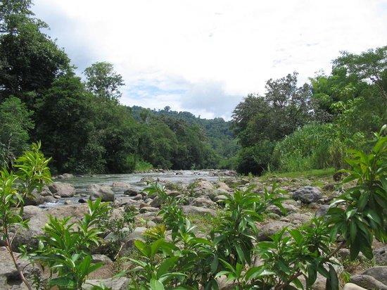 Puerto Viejo, Kosta Rika: Yorkin River