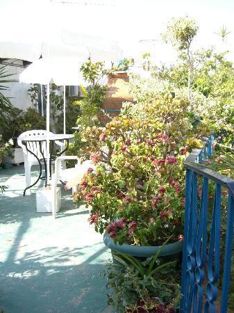 Olga's Pension: roof terrace sun trap
