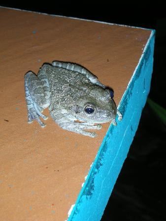 Toad Check Out The Feet Picture Of Iberostar Mojito Cayo Coco