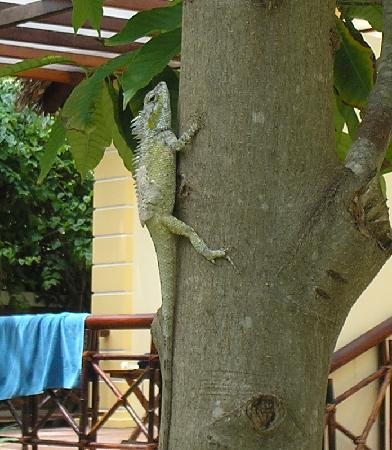 Little Mui Ne Cottages: garden resident