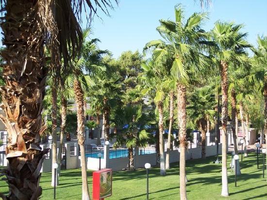 Best Western Pahrump Oasis: Pool and courtyard