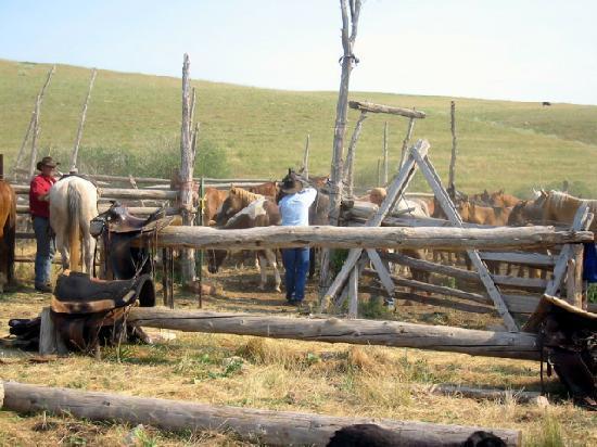 TX Ranch : roping horses