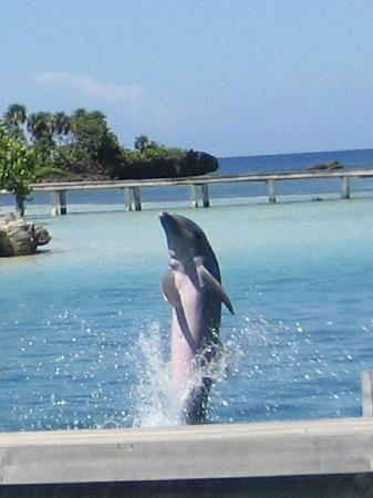 Bananarama Beach and Dive Resort: Dolphin at Antony's Key