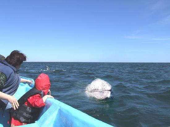 Guerrero Negro, Mexico: Whale Tour was awsome