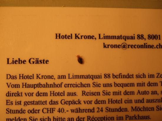 Hostel Krone: Bettwanze