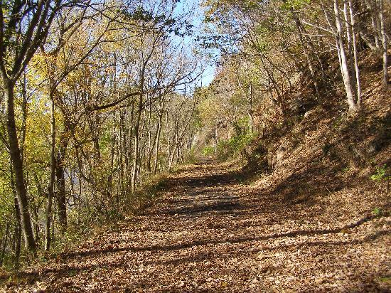 New River Trail State Park : Deep in the woods