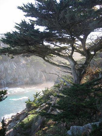 Plaża Big Sur, Kalifornia: Point Lobos State Park Cypress