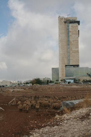 Holiday Inn Amman : Holiday  Inn Amman - As shepards tend the sheep.