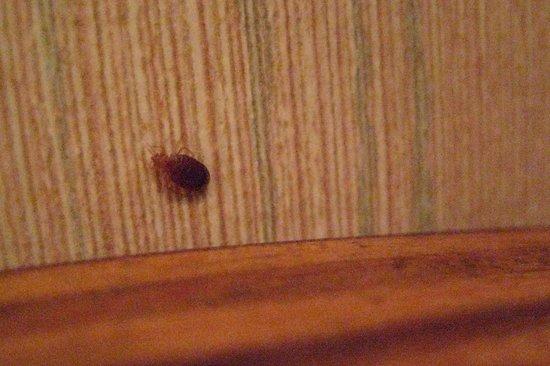 Bay Front Inn: bugs